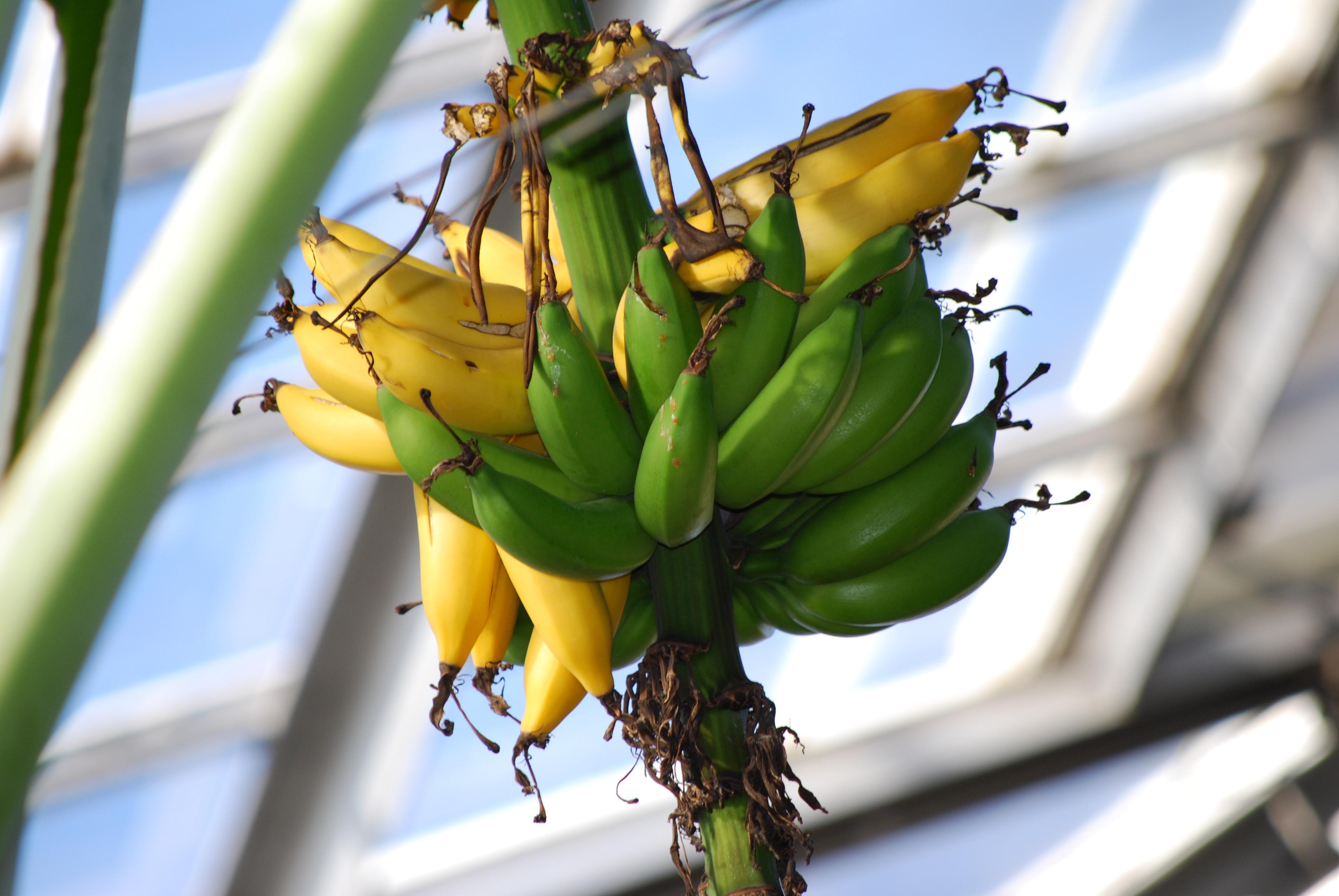 Bananas Up Close