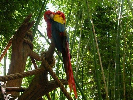 Parrot on Display, Animal Kingdom