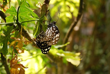 Butterfly Just Hanging Around