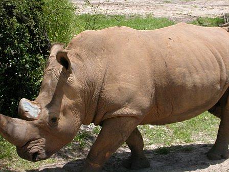 Rhino Crossing