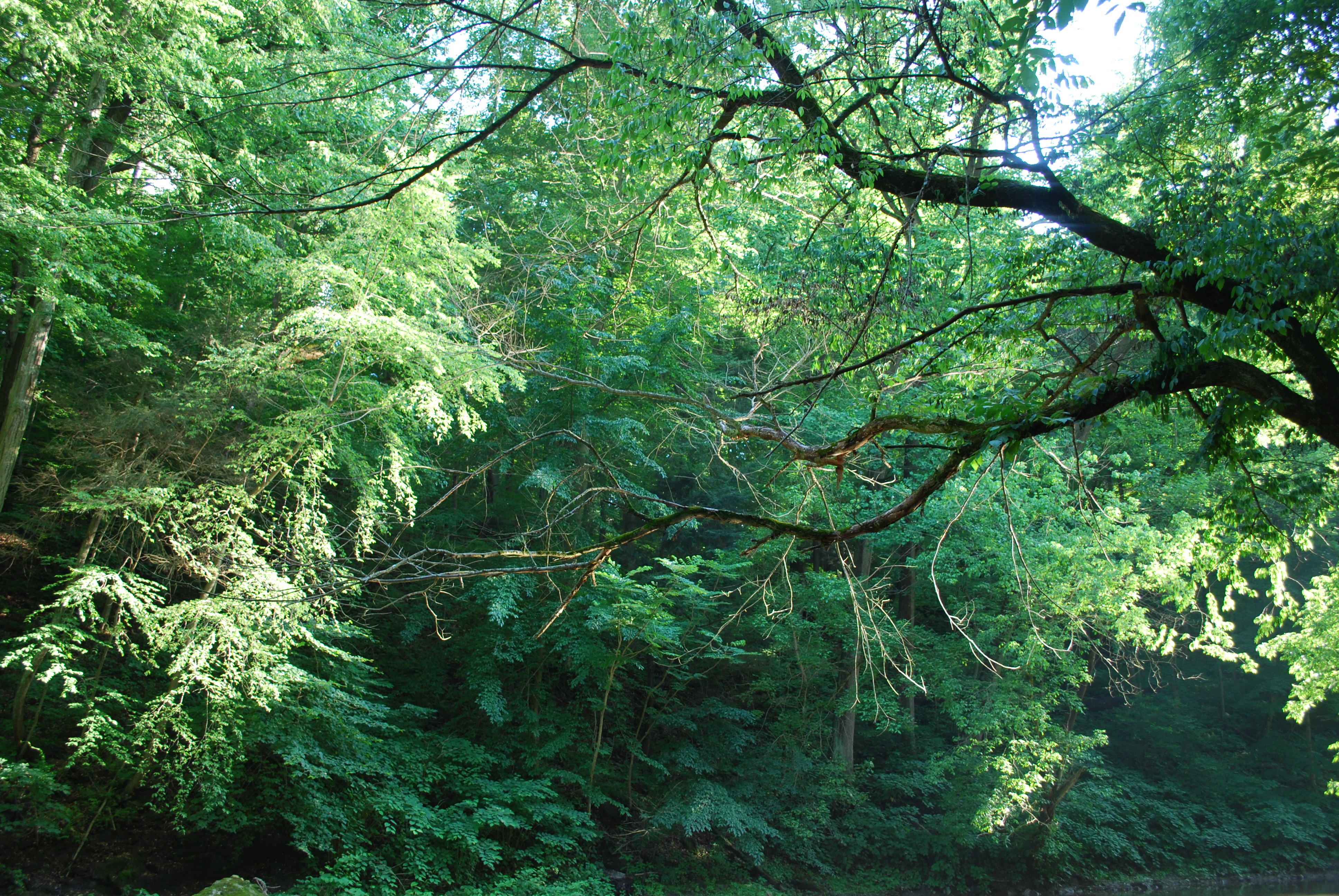The forest of Wissahickon Creek