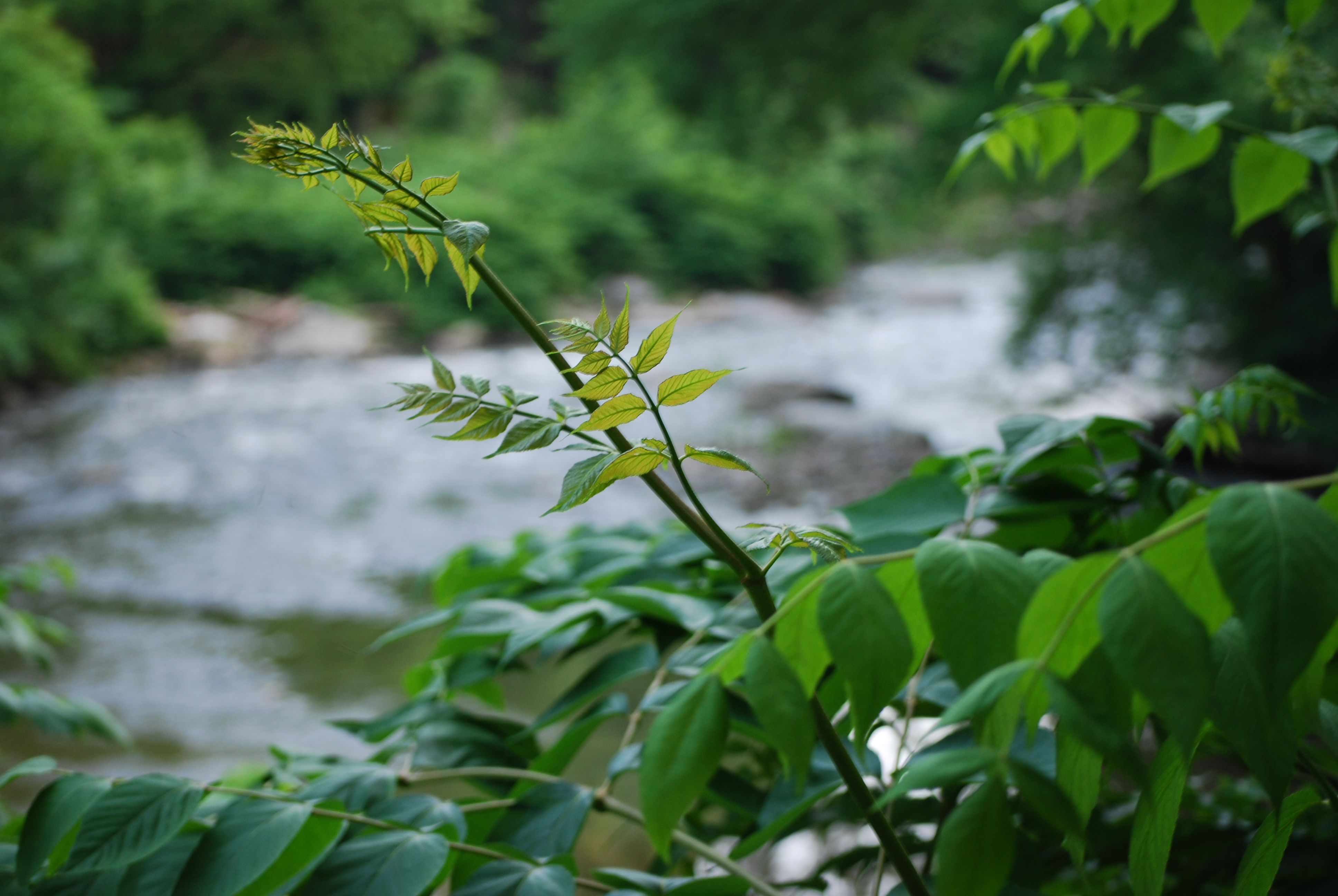 Diverse Ecology of the Wissahickon