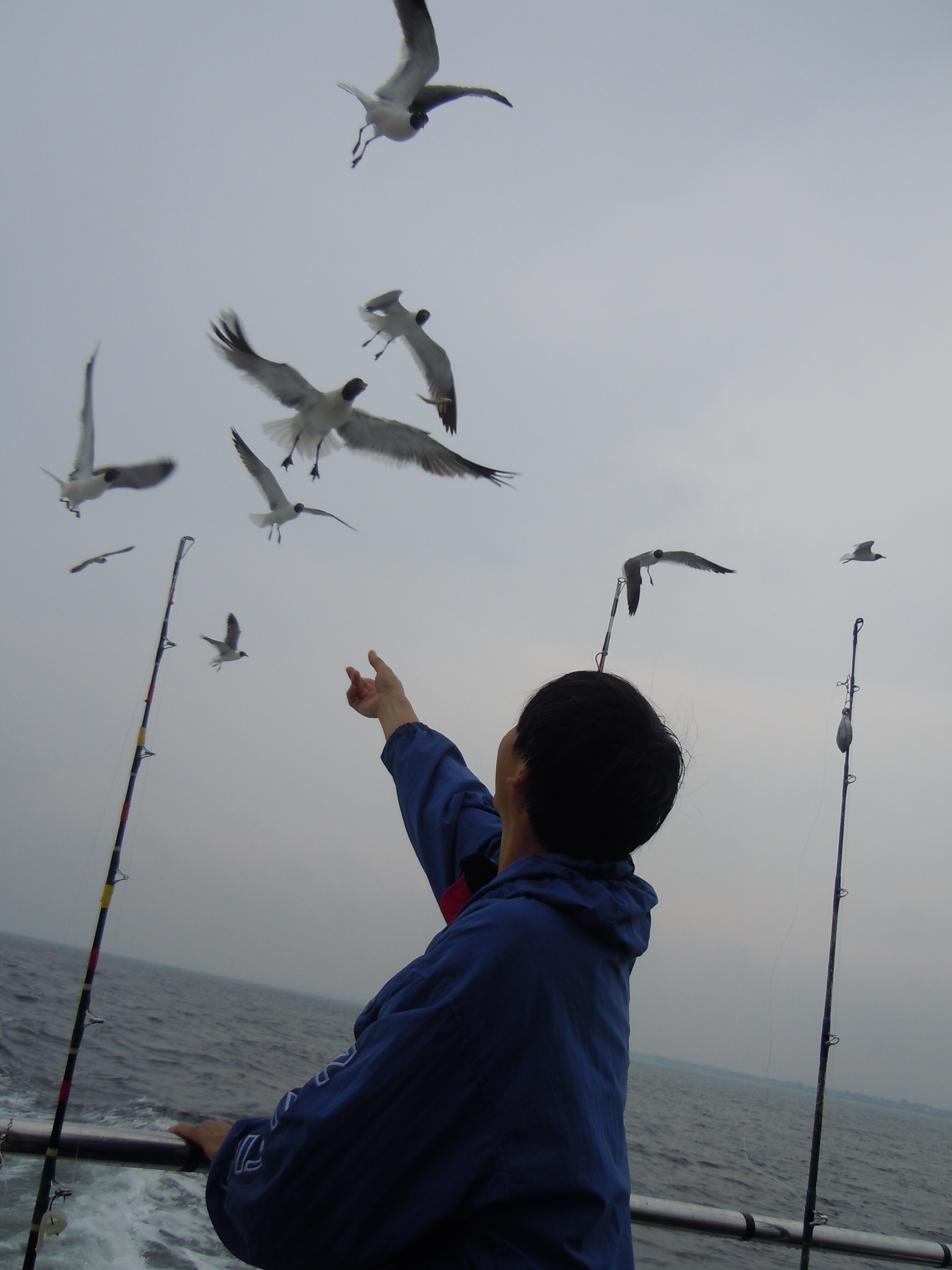 Feeding the Gulls while Fishing = Unwanted Attention