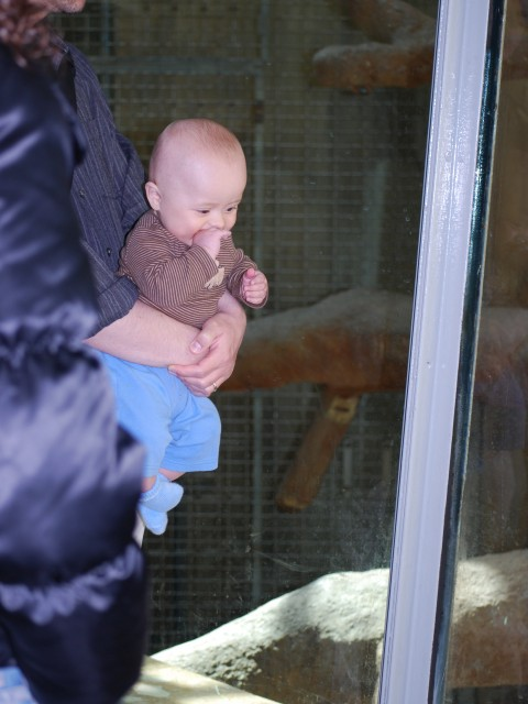 Baby watches gorilla