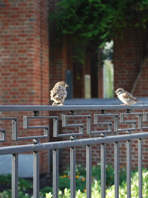 Birds perch on a rail near the Liberty Bell