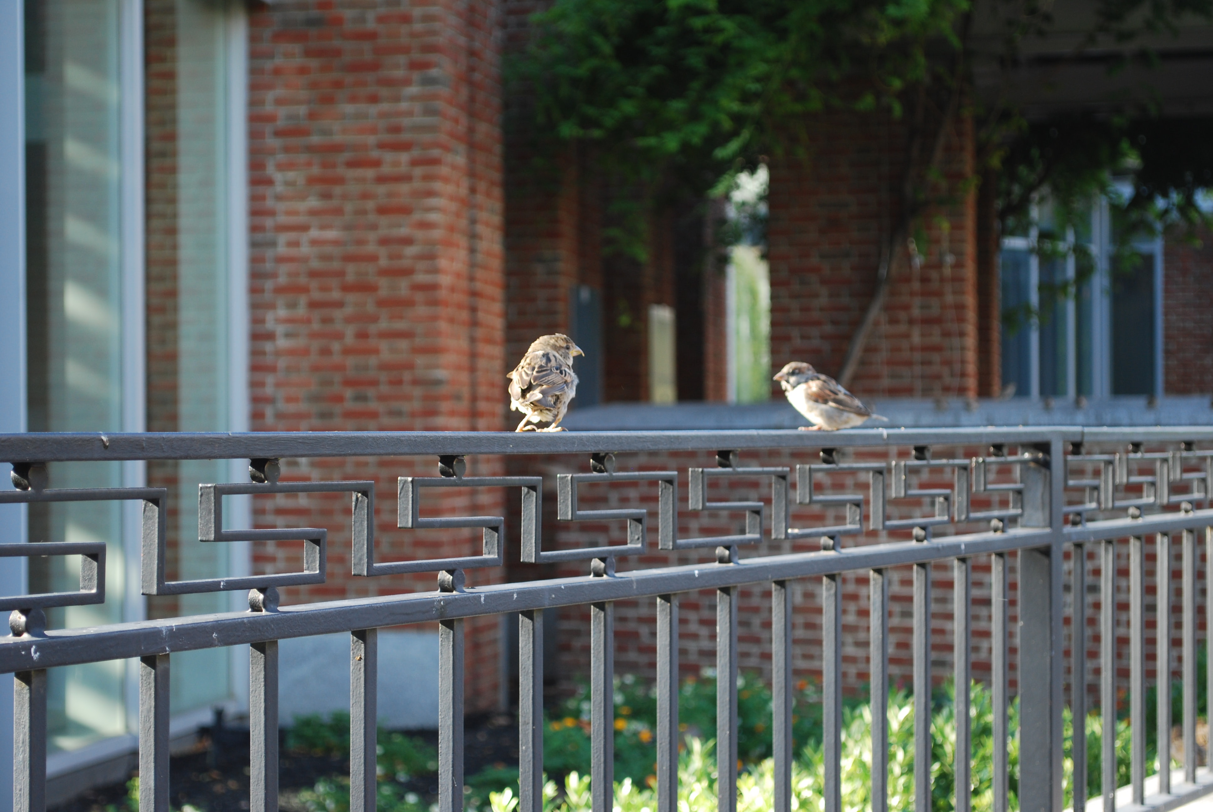 Birds perch on a rail near the Liberty Bell