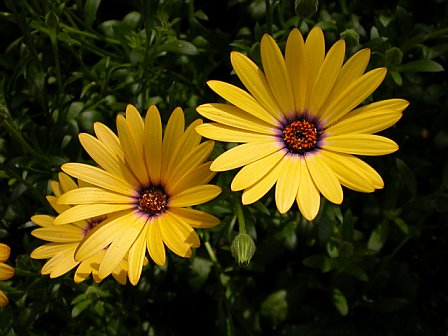 Purple & Yellow flowers